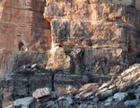 Adıyaman'da bulundu! Sarp kayalıklarda dini yapı