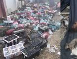 Dehşete düşüren görüntüler! 5 bin hayvan ölü bulundu