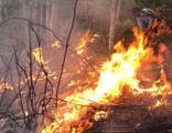 Orman yangınını söndürmek isterken hayatını kaybetti