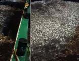 Çanakkale'de avladıkları 15 ton balığı geri bıraktılar