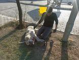 Boğazı kesilen köpeği sokak ortasında ameliyat etti!