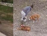 Sopayla köpeklerini dövdü