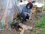 Yavru köpekler zehirlenerek öldürüldü