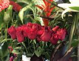 14 Şubat nedeniyle çiçekçilerin çalışma saatlerine düzenleme