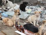 70 sokak köpeği dağlık alanda ölüme terk edildi