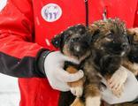 11 yavru köpek donmaktan kurtarıldı