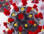 Laboratuvar ortamında mutasyon taşıyan virüs üretildi