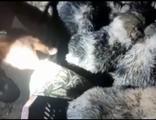 Büz içerisinde mahsur kalan yavruları itfaiye kurtardı