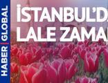 İstanbul'da lale zamanı... Görsel şölen bir ay sürecek