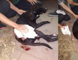 Silahlı magandalar sokak köpeğini vurdu!