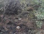 Ormanı yakan terör örgütü PKK üyesi tutuklandı