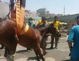 Yaralı atı kurtarma operasyonu