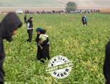Afgan göçmenler: 'Hayalet bir yaşam...'