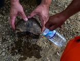 Kaplumbağaya can suyu!