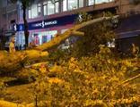 Kuvvetli fırtına ağacı böyle devirdi! O anlar kamerada!