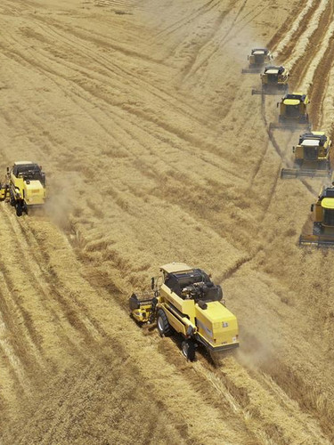 Türkiye'nin en büyük hasadı! 157 biçerdöver aynı anda araziye girdi