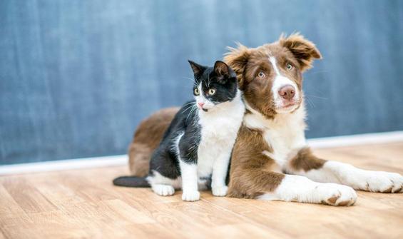 4 Ekim Hayvanlari Koruma Gunu Nun Onemi Nedir Nasil Ortaya