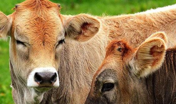 Hayvanlar hakkında 16 şaşırtıcı bilgi