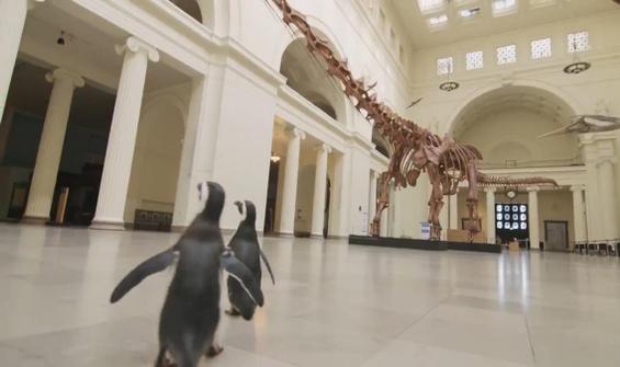 Penguenler uzak akrabalarını müzede ziyaret etti