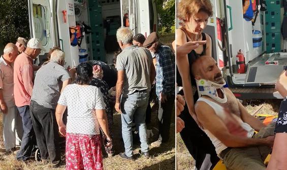 Tunceli'de ayı saldırısında 1 kişi yaralandı