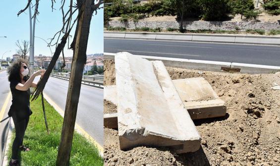 Ankara'da ağaçların kurumasının sebebi belli oldu