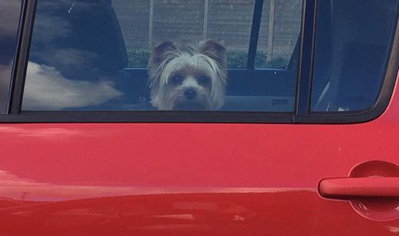 Arabada bıraktığı köpeği öldü, dava açılıyor!