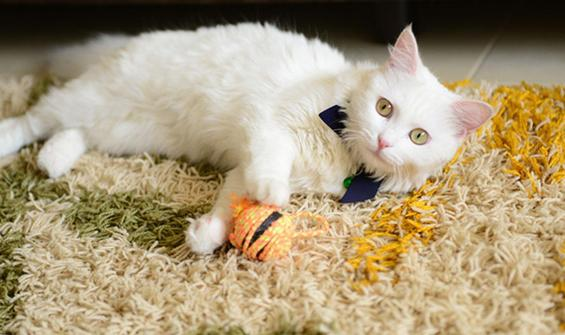 Kedisi ile birlikte koronavirüsü yendi