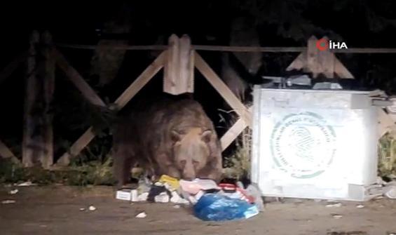 Çöpleri karıştıran ayı böyle görüntülendi