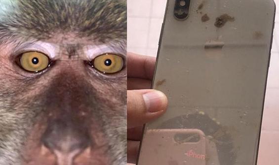 Kaybolan telefonundan maymun selfieleri çıktı