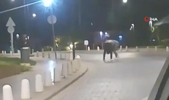 Sokak ortasında böyle kavga ettiler