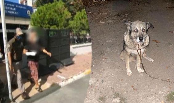 3 köpeği bıçakladı, birini öldürdü!