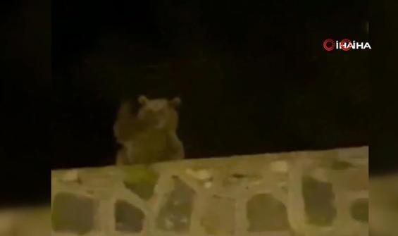 Sokakta vatandaşla karşılaşan ayı böyle el salladı