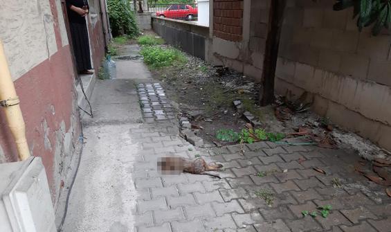 Zonguldak'ta sokak köpeği başı kopmuş halde bulundu