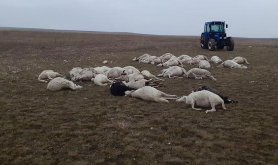 Yıldırım düşmesi sonucu 34 koyun telef oldu