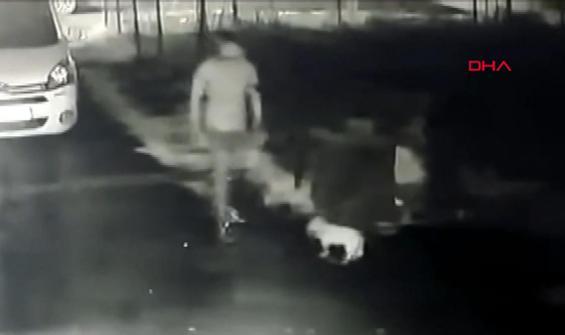 Köpek hırsızları güvenlik kamerasında