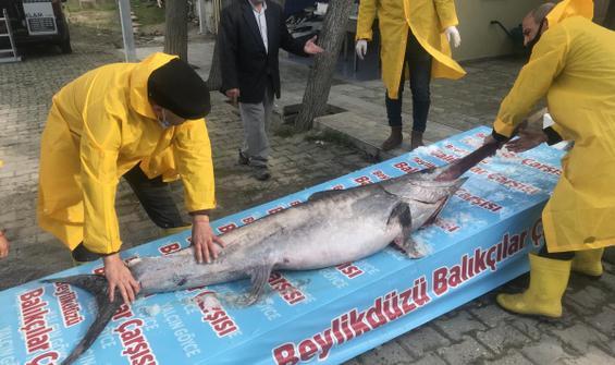 Marmara Denizi açıklarında dev 'Kılıç Balığı' yakalandı