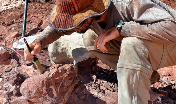 Yuvası bulundu! Tam 70 milyon yıllık