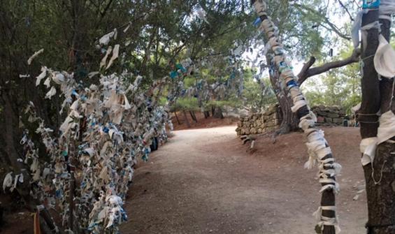 Dilek ağaçlarına tıbbi maske astılar