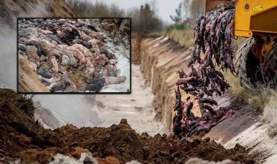 Milyonlarcasını öldürüp toplu mezarlara gömüyorlar