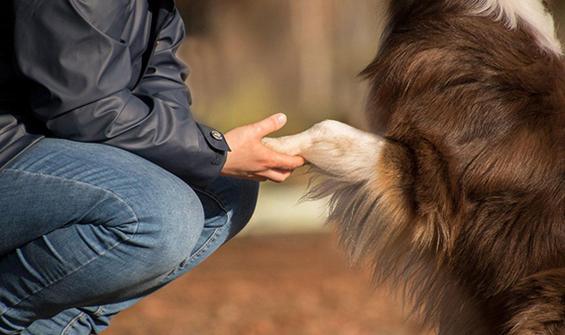 Köpek sahiplerine 'koronavirüs' uyarısı!