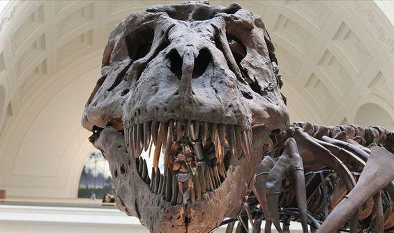 'Asteroit çarpmasaydı dinozorlar daha uzun süre yaşardı'