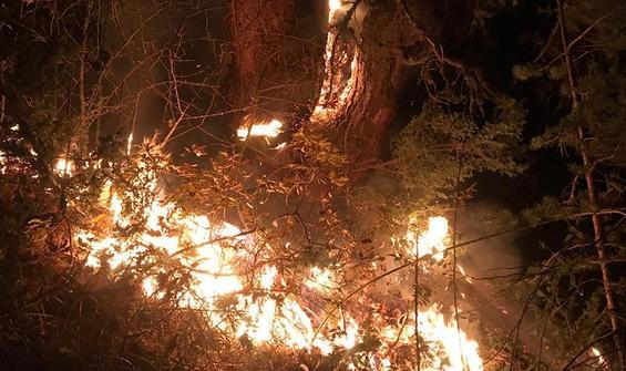 Kastamonu'da orman yangını!