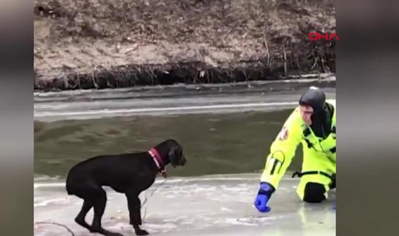 Buz tutan nehirde mahsur kalan köpek böyle kurtarıldı