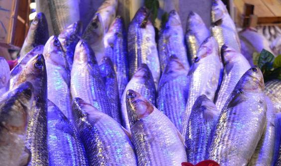 Son 2 haftada bollaştı! Tezgahın en ucuz balığı oldu