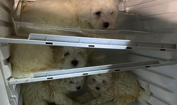Yavru köpekleri buzdolabına saklamışlar