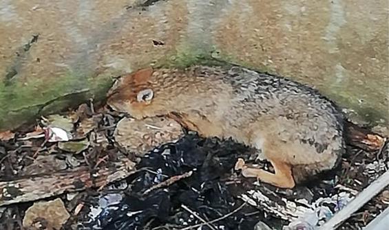 Kuyuya düşen tilkiyi böyle kurtardılar