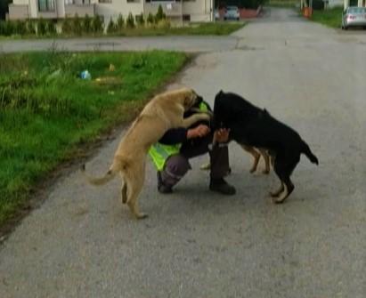 Sokak köpeklerinden belediye ekiplerine sevgi gösterisi