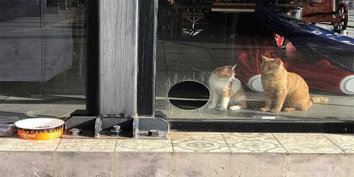 Salgında kapalı kalan kafeteryasını kedilere açtı