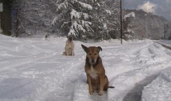 Sarıyer'de kar yağışında sokak köpekleri unutuldu