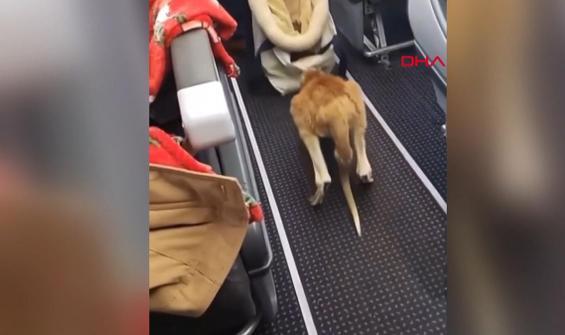 En sıra dışı yolcu kamerada
